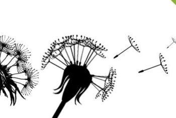 Free Dandelion Silhouette Design Mockup in PSD
