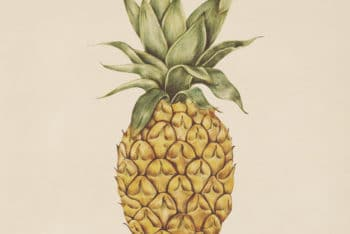Free Watercolor Pineapple Illustration Mockup in PSD