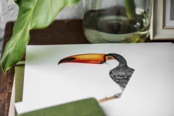Free Realistic Hornbill Bird Drawing Mockup in PSD