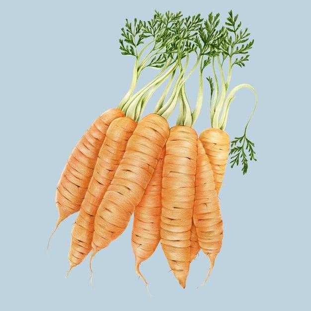 Hand Drawn Carrot Watercolor