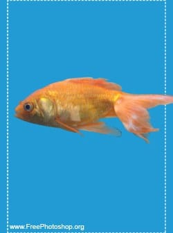 Realistic Digital Goldfish