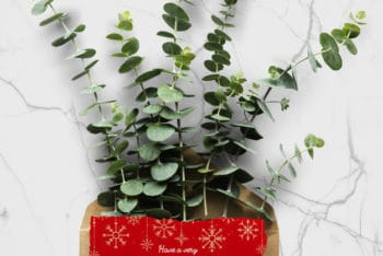 Free Christmas Holiday Plant Greeting Mockup