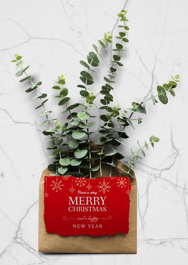 Christmas Holiday Plant Greeting