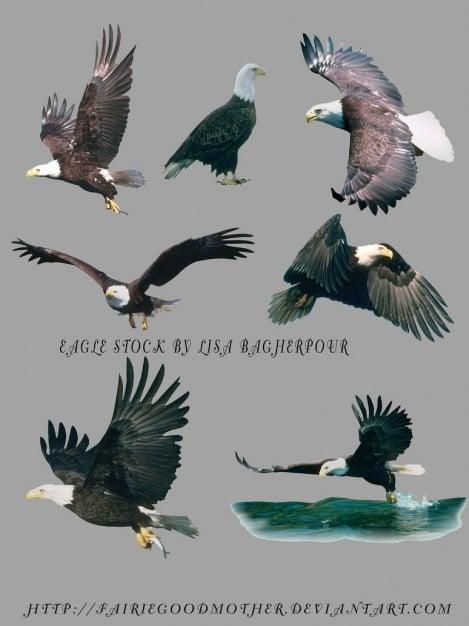 Flying Eagles Design