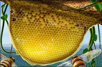 Bee Nest Illustration