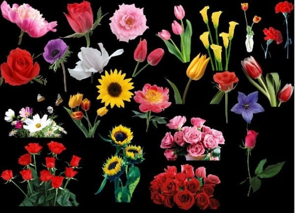 Lovely Flower Variety Art