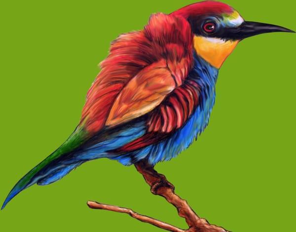 Colorful Rainbow Bird Illustration