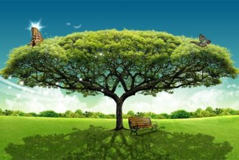 Free Large Tree Plus Grassland Mockup in PSD