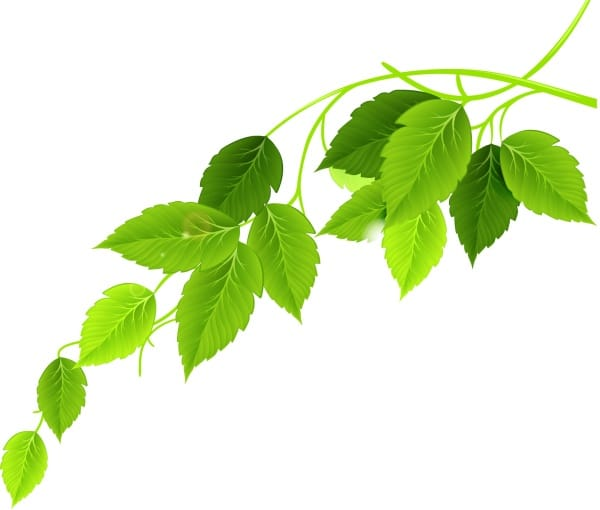 Healthy Green Leaves