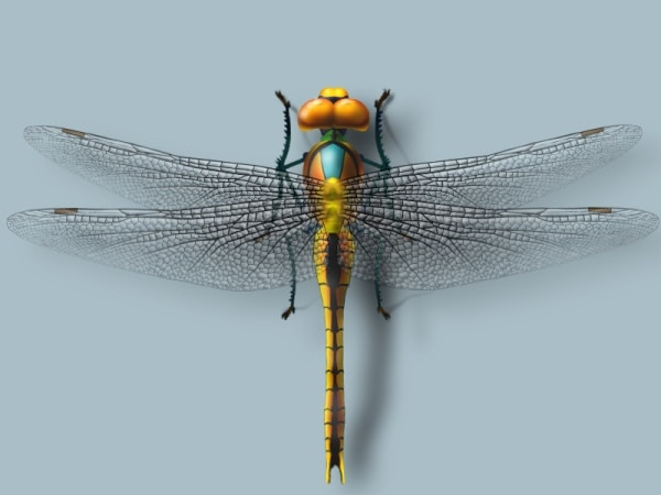 Realistic Dragonfly Design
