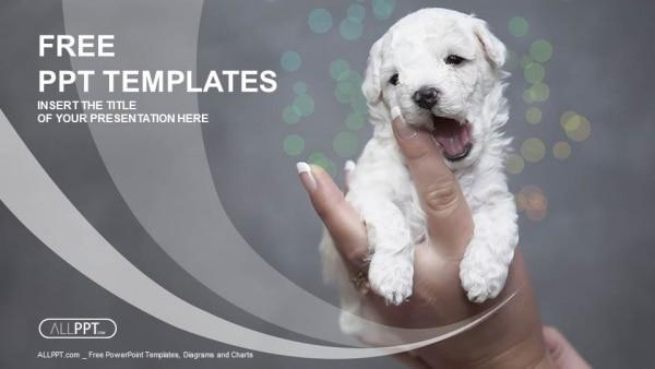 Cute Puppy Adoption