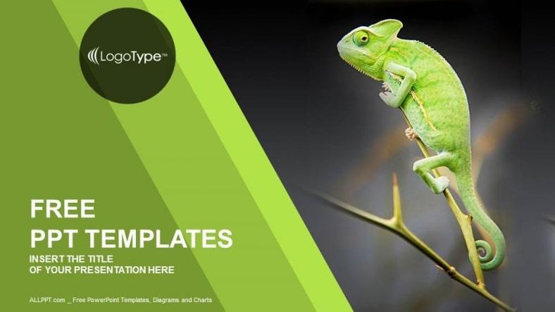 Nature Chameleon Habitat