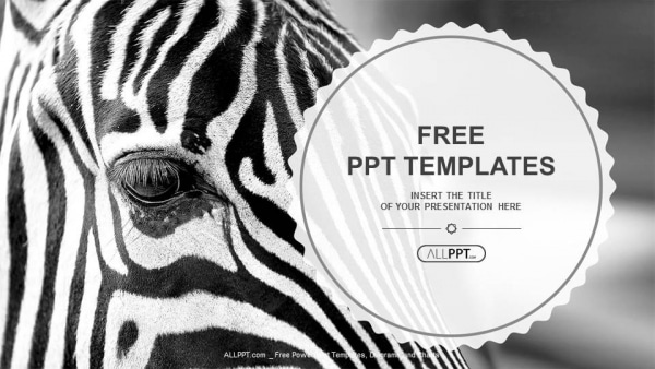 Free Monochrome Zebra Art Powerpoint Template Designhooks
