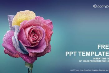 Free Multi Colored Rose Powerpoint Template