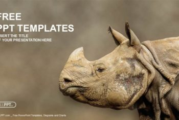 Free Majestic Rhinoceros Photo Powerpoint Template