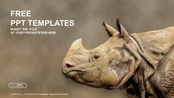 Majestic Rhinoceros Photo