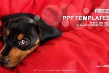 Free Cute Rottweiler Puppy Powerpoint Template