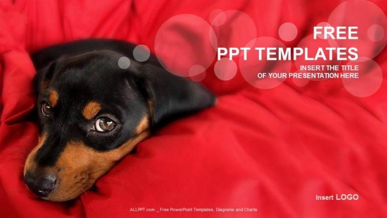 Free Cute Rottweiler Puppy Powerpoint Template Designhooks