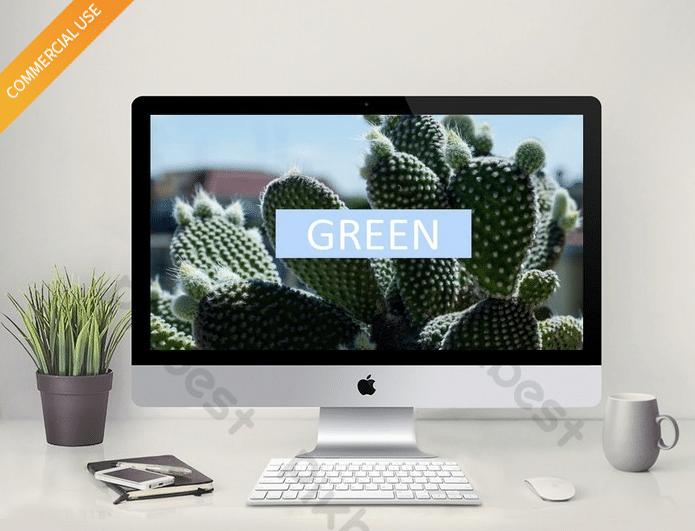 Healthy Cactus Plant