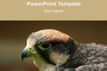 Free Bird Studies Concept Powerpoint Template