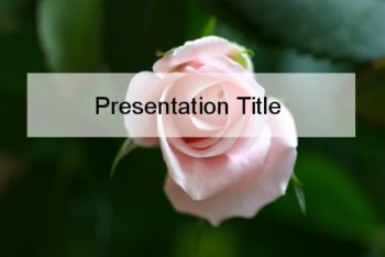 Free Fresh Pink Rose Powerpoint Template
