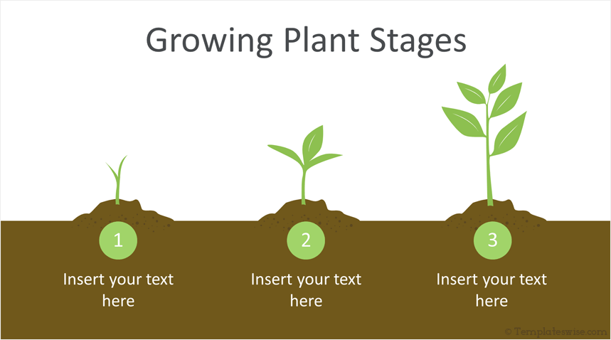 Plant Growing Tips
