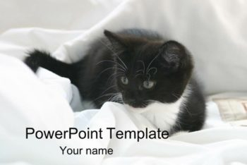 Free Cute Kitten Slides Powerpoint Template