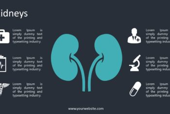 Free Kidney Lecture Slides Powerpoint Template